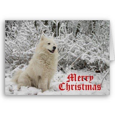 wolf_christmas_card_merry_christmas-p137729405903114989qqld_400.jpg
